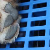 狗垫子塑料垫板 狗笼子脚垫板 宠物垫板散热板适大中小型犬猫