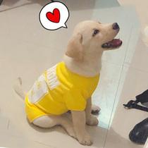 狗狗衣服夏季薄款金毛拉布拉多防掉毛中型大型犬宠物春秋大狗背心
