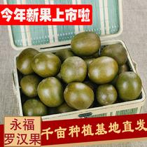 羅漢果野生廣西桂林永福特產干果泡水特級正品泡茶涼茶潤喉養生茶