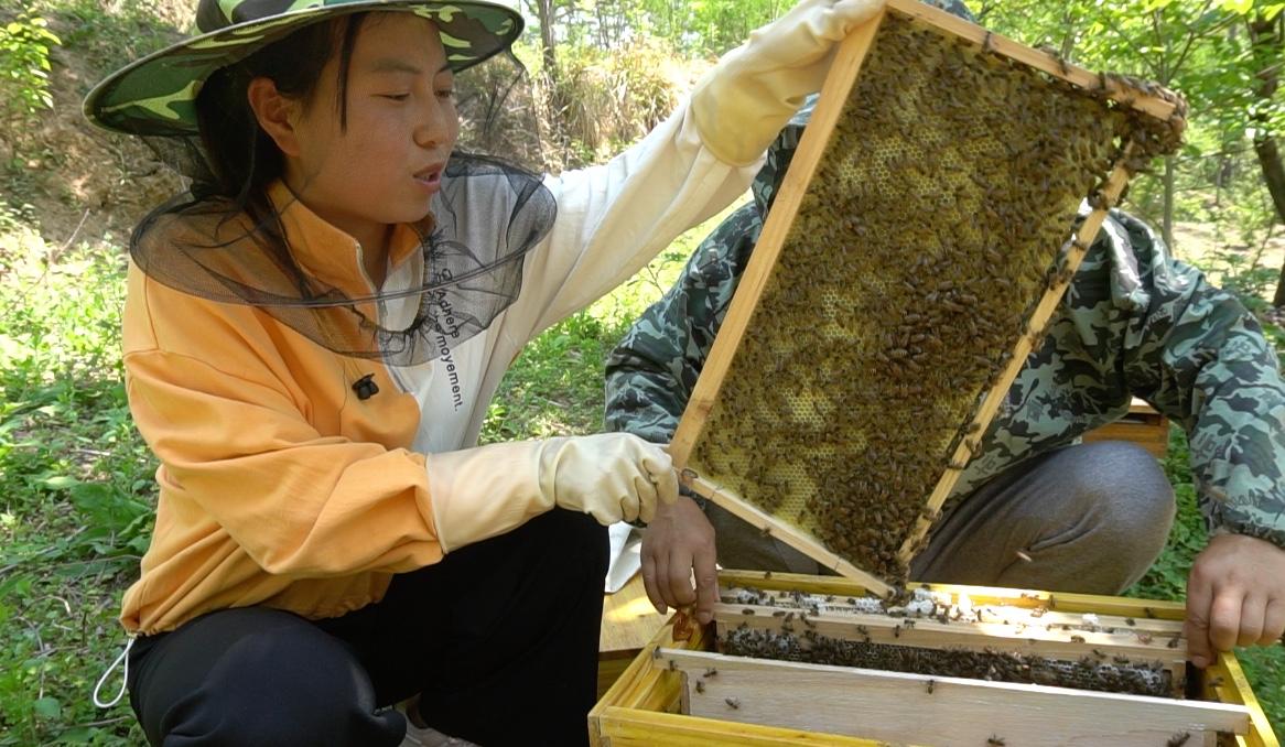 洋芋团团 甘肃陇南徽县农家自产百花土蜂蜜500g图片
