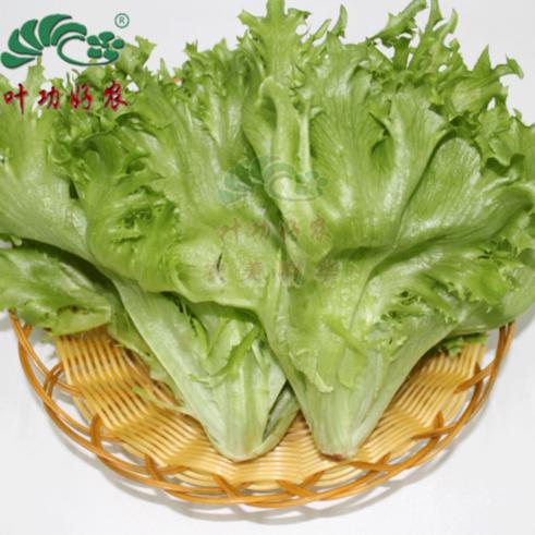 西餐蔬菜沙拉 新鲜绿叶生菜 玻璃生菜沙拉菜 500g
