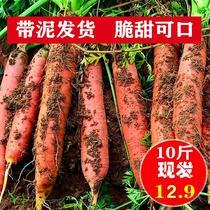 。新鲜胡萝卜红萝卜农家新鲜水果蔬菜现挖原生态不水洗10低价包*