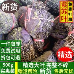 新货干紫苏紫苏叶新鲜野生天然紫苏叶食用500g包邮泡茶中药材可粉