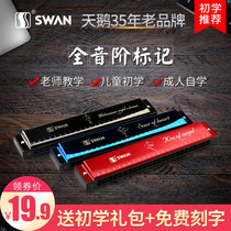Swan harmonica 24 hole children Beginner Adult Senior Professional polyphonic C into the door organ men and women musical instruments