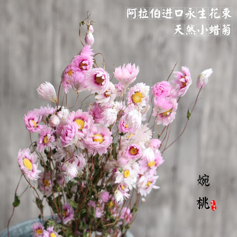 【小蜡菊】天然小雏菊艺术干花阿拉伯永生花家居装饰摆设拍摄道具
