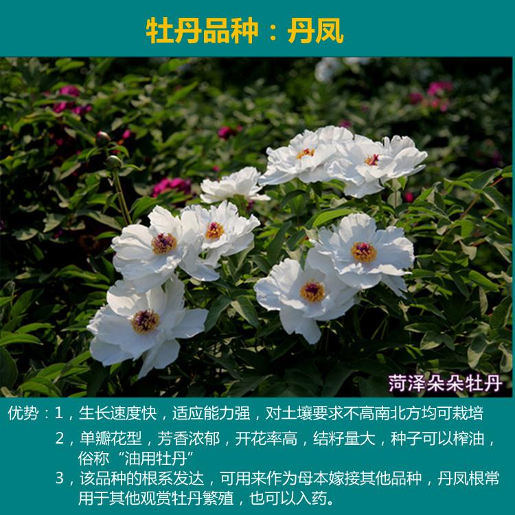 Чай Пай Му Тан Артикул 539614923808