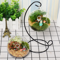 Micro landscape ecological Bottle Mini green planting potted diy moss plant creative glass bottle Indoor Cottage Bonsai