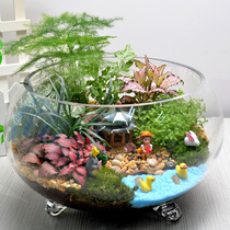Moss Micro landscape combination plant Ecological bottle potted office desktop green flower Men and women creative Gifts