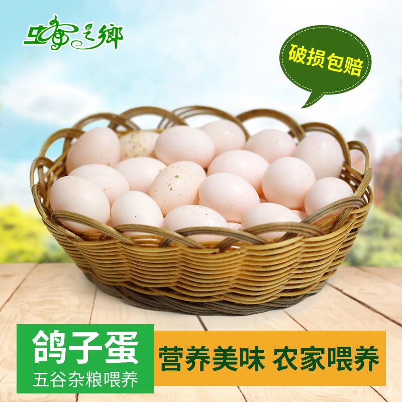 蜂之乡农家杂粮鸽子蛋白鸽蛋生鲜30枚孕妇宝宝辅食顺丰包邮新鲜
