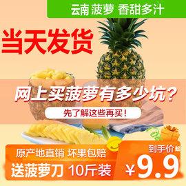 水果當天發貨云南香水菠蘿水果新鮮10斤包郵當季整箱手撕大鳳梨圖片