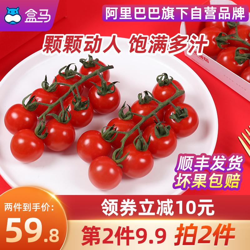 【薇娅推荐】盒马枝纯串收小番茄198g*3新鲜圣女果生吃西红柿水果