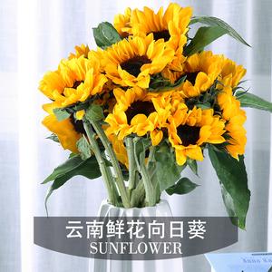 群友到货!【5朵装】云南昆明向日葵鲜花