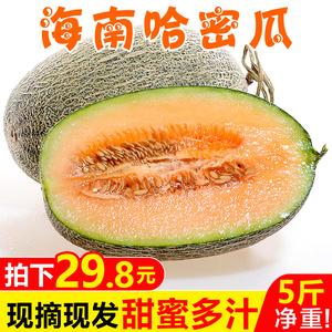 海南哈密瓜5斤 新鲜当季水果脆甜网纹哈蜜瓜应季小香瓜整箱包邮