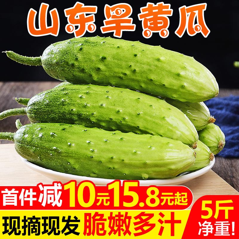 山东旱黄瓜水果小黄瓜5斤 新鲜孕妇蔬菜生吃荷兰青瓜当季特产包邮