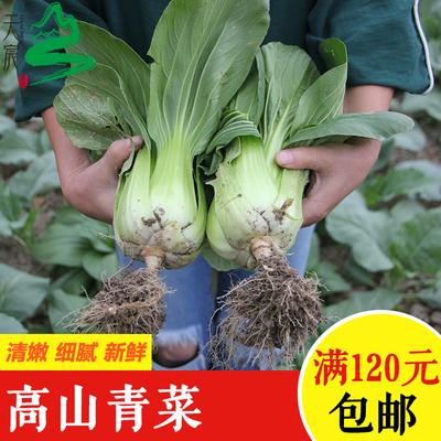 天宸农庄高山种植蔬菜新鲜青菜无公害有虫洞500g装120元包邮