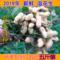 2019年新鲜湿花生农家自种现挖现卖带壳原味粉红皮可水煮一份包邮