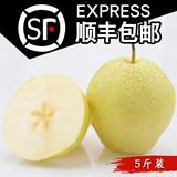 煮雪 赵县现摘脆甜多汁雪梨5斤 券后16.9元顺丰包邮