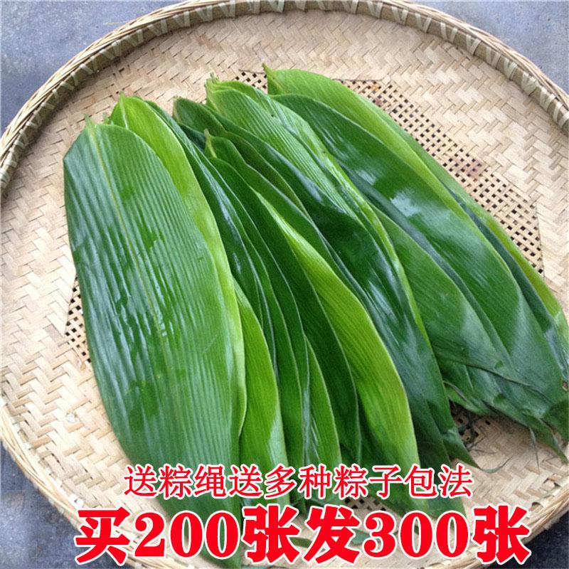 【买二送一】新鲜粽叶 粽子叶纯天然大粽叶包粽子的叶子箬叶100片