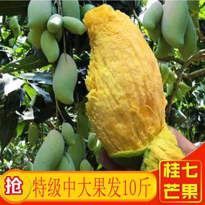 桂七芒果新鲜包邮广西百色当季水果10斤整箱特产应季香芒青芒