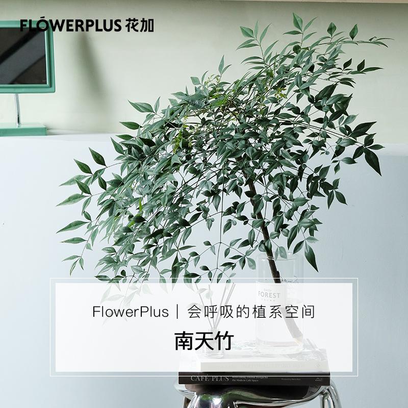 FlowerPlus花加水培桌面森系绿植南天竹夏季清新装饰办公室摆件