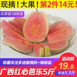 廣西紅心芭樂番石榴5斤大果 新鮮采摘熱帶當季水果 清脆清甜高山圖片