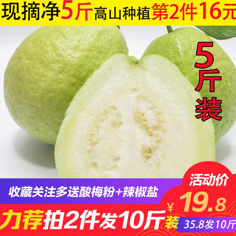 广西现摘白心番石榴芭乐5斤装 清脆清甜 当季新鲜热带水果10