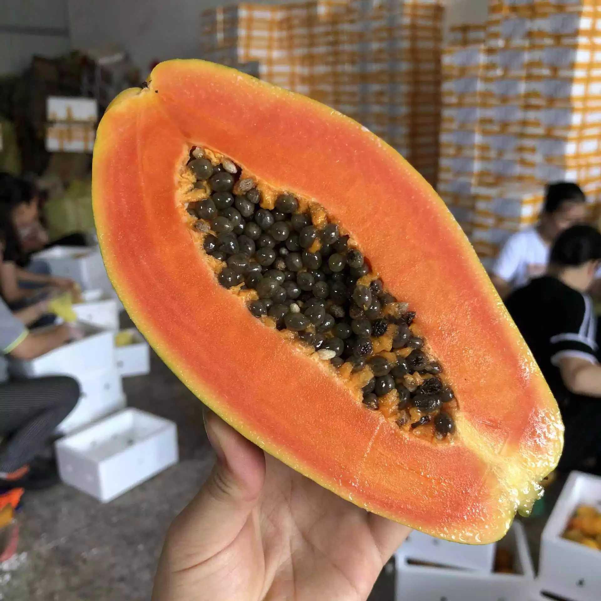 广东雷州红心木瓜9斤装约4-6个水果批发包邮 新鲜