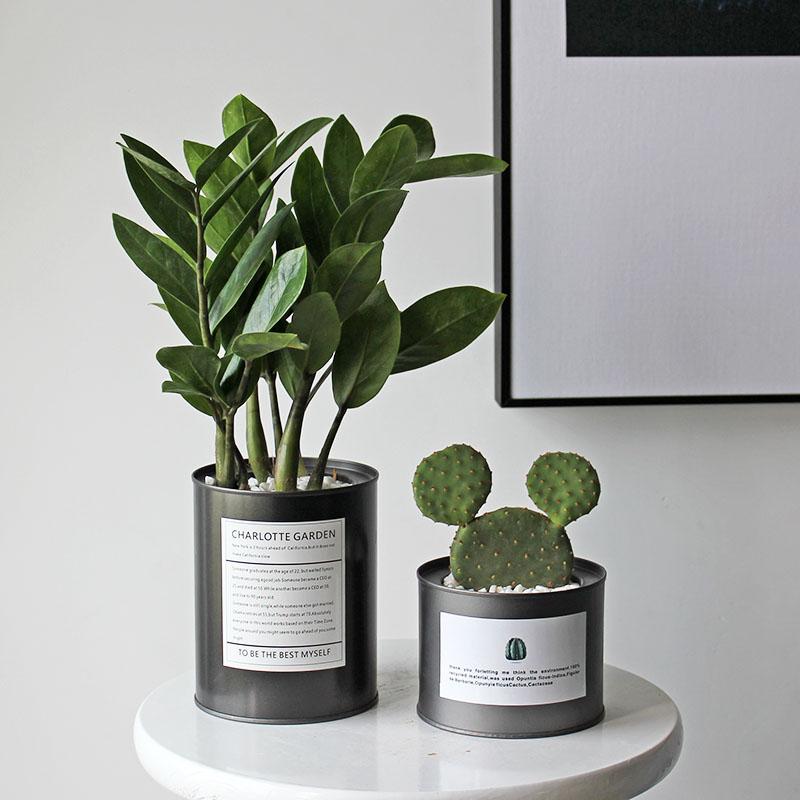 办公室桌面吸甲醛植物室内防辐射仙人掌多肉小盆栽花卉绿植好养