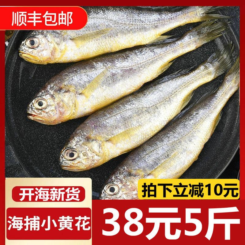 野生海捕舟山新鲜小黄花鱼小黄鱼