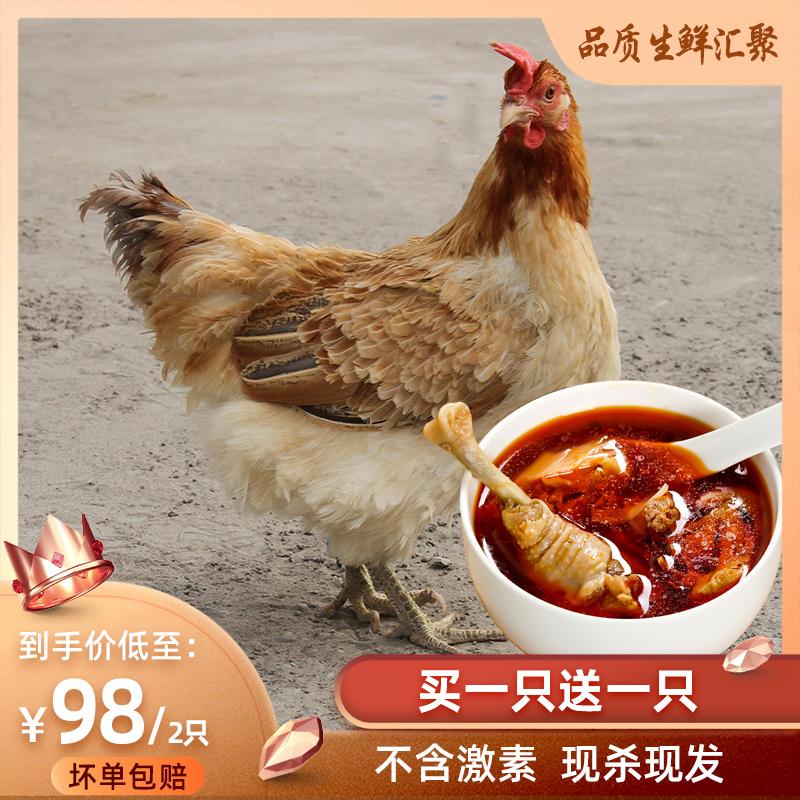 民大农牧 1年老母鸡正宗农家散养土鸡草鸡农村走地鸡新鲜现杀整鸡