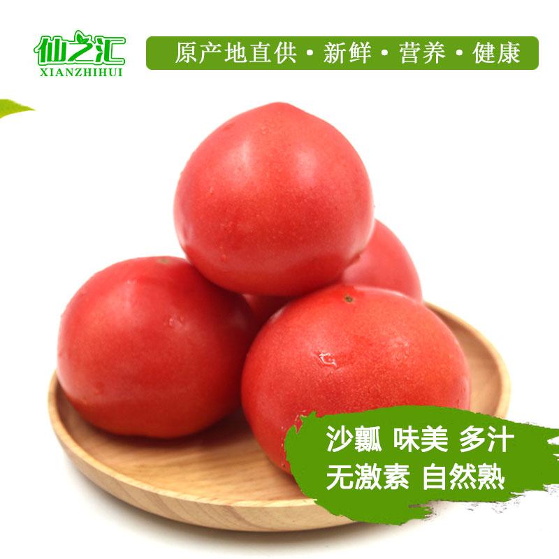 新鲜西红柿番茄自然熟毛粉柿子新鲜农家自种大西红柿5斤包邮