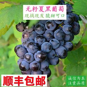 云南无籽夏黑葡萄水果4斤 现摘新鲜葡萄黑提子包邮 非红提黑美人