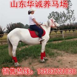 蒙古马出售 国产改良马半血马 景区骑乘马高头大马 国产德保矮马