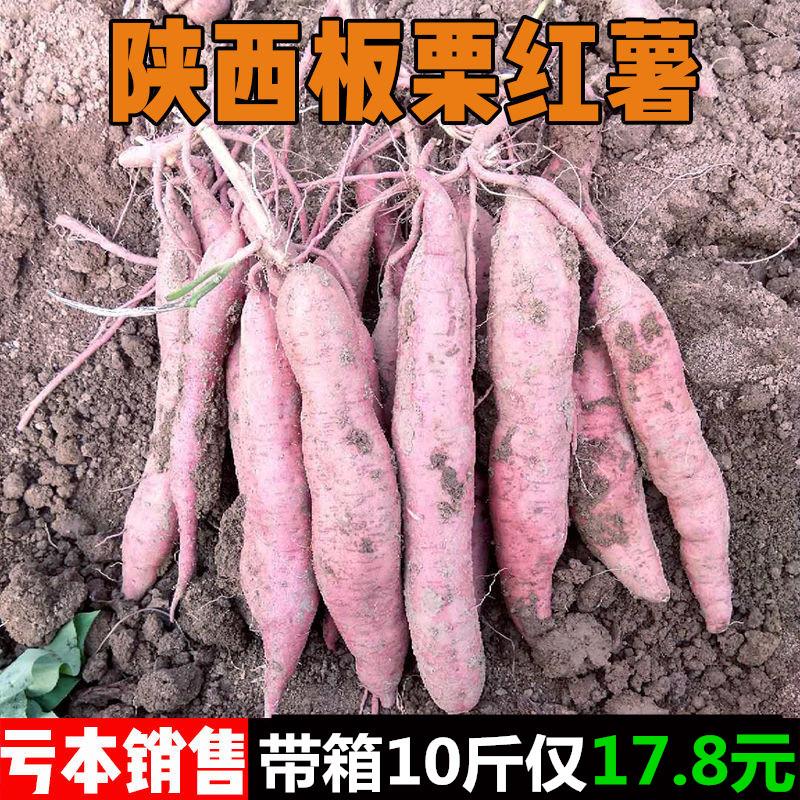 陕西沙地板栗红薯新鲜现挖大小番紫薯山芋干甜地瓜带箱10斤包邮