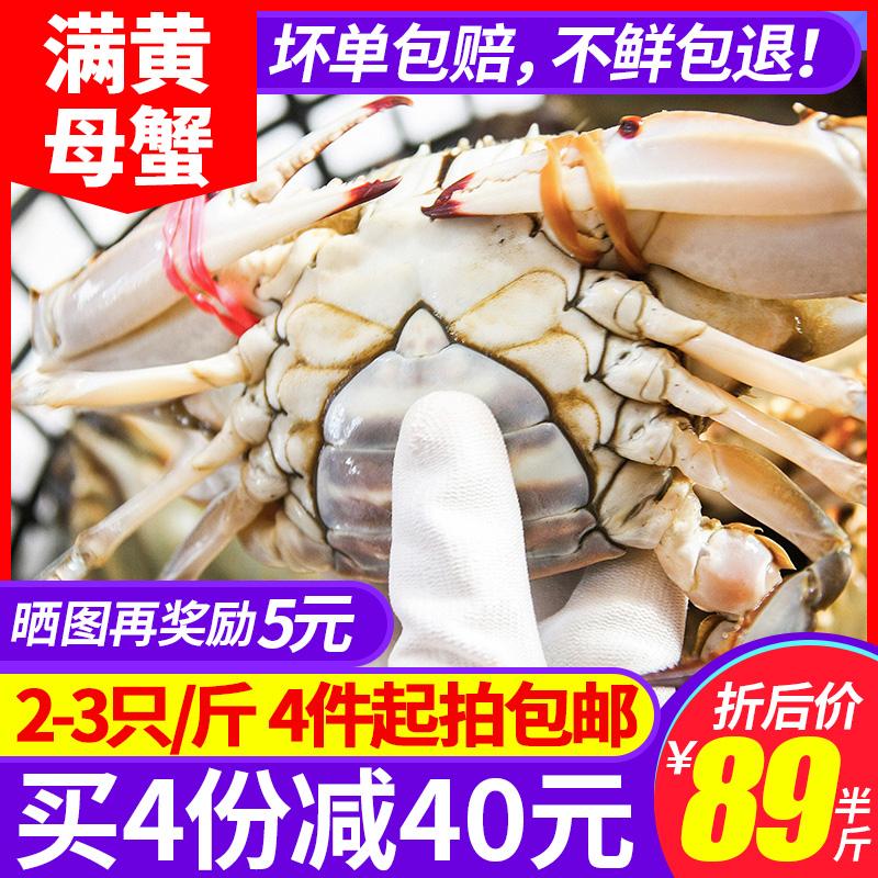 梭子蟹鲜活母大海蟹免邮螃蟹新鲜活体超大野生海鲜水产顺丰包邮