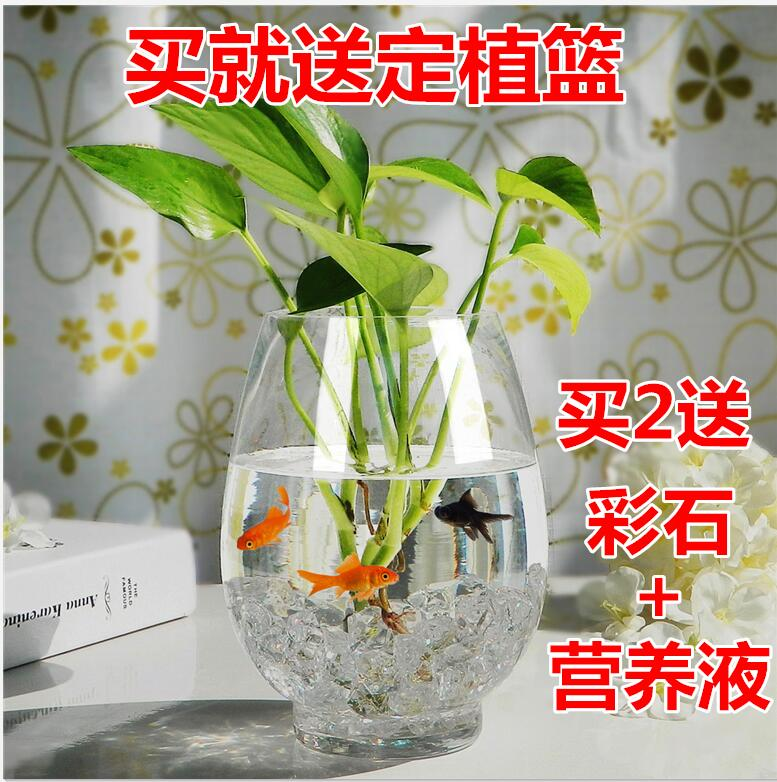 Большой размер стекло гидропоника завод ваза цветочный горшок прозрачный яйцо динозавра cциндапсус золотистый богатство бамбук вода поддержка аквариум устройство блюдо позволять устройство