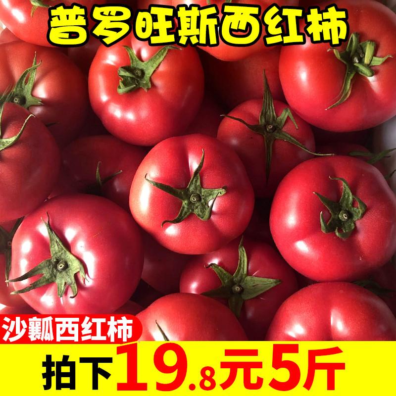 现摘普罗旺斯水果西红柿新鲜 自然熟5斤包邮当季大番茄沙瓤可生吃图片