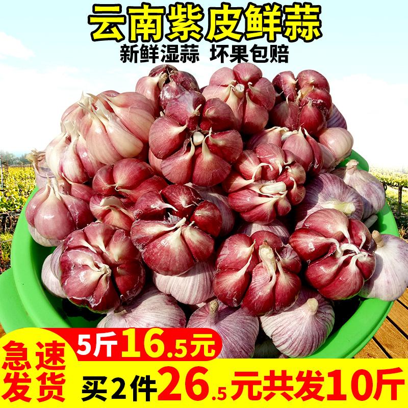 云南紫皮多瓣5斤包邮新鲜大蒜头湿