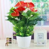 仿真花红掌假绿植花客厅装饰绿色植物落地塑料盆栽摆设盆栽盆景