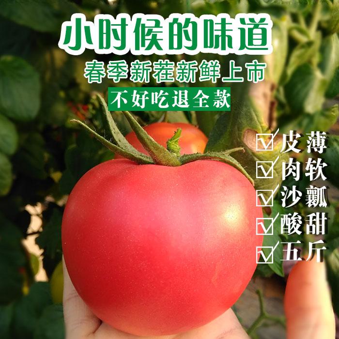 临安天目山番茄西红柿农家新鲜蔬菜自然蜂熟宝宝辅食孕妇水果5斤