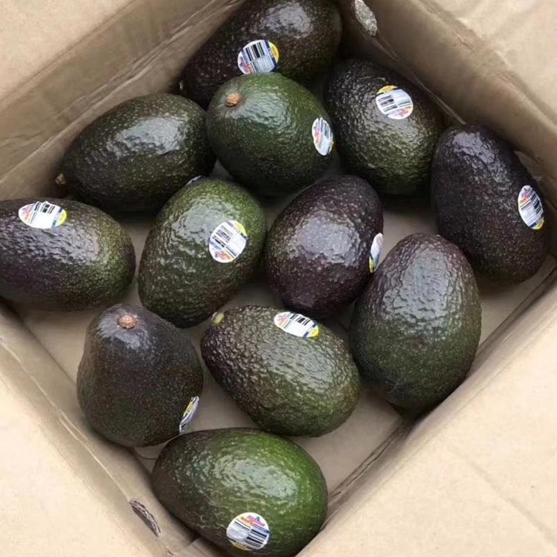 顺丰包邮 智利进口5/8个牛油果大果140-220g油梨鳄梨新鲜水果批发