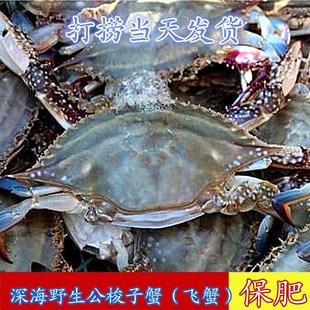 丹东梭子蟹鲜活飞蟹半斤一只螃蟹正宗野生公梭子蟹鲜活装箱