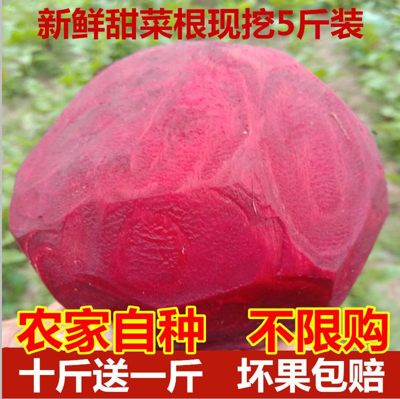 2019新鲜甜菜根红菜头甜菜头紫菜头红甜菜5斤装现挖有机蔬菜
