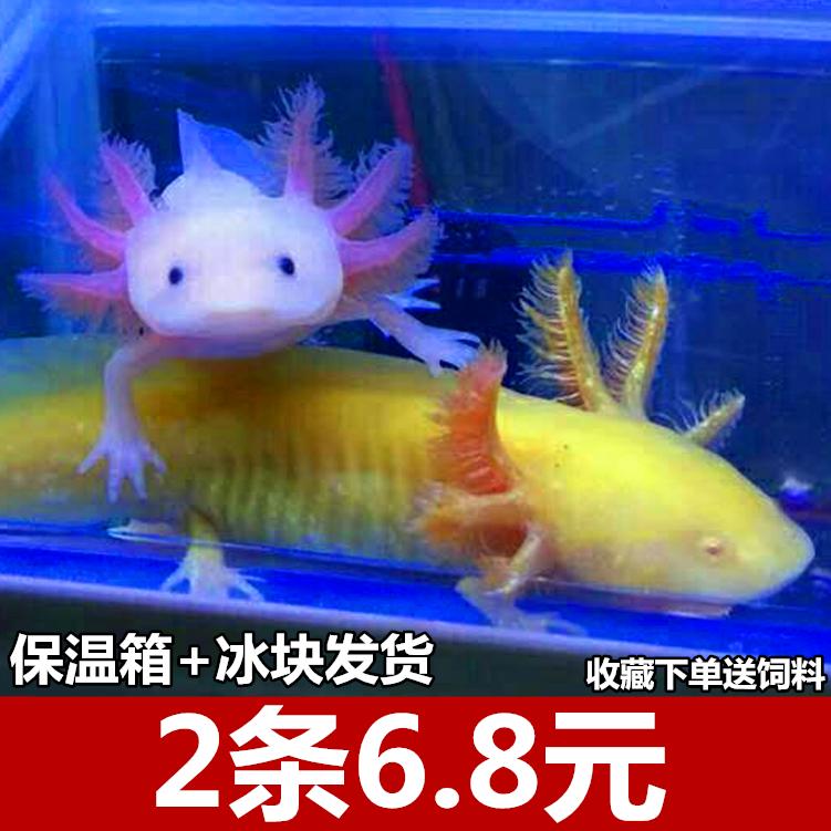 Рыбы Артикул 589709185761
