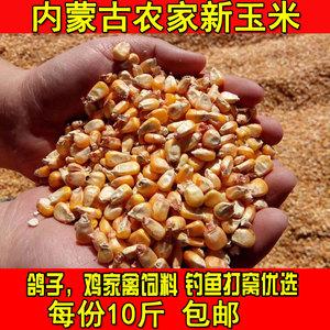 干玉米粒饲料喂鸡钓鱼打窝鱼饵鸽子鸭鹅宠物农家自产苞米粒散装