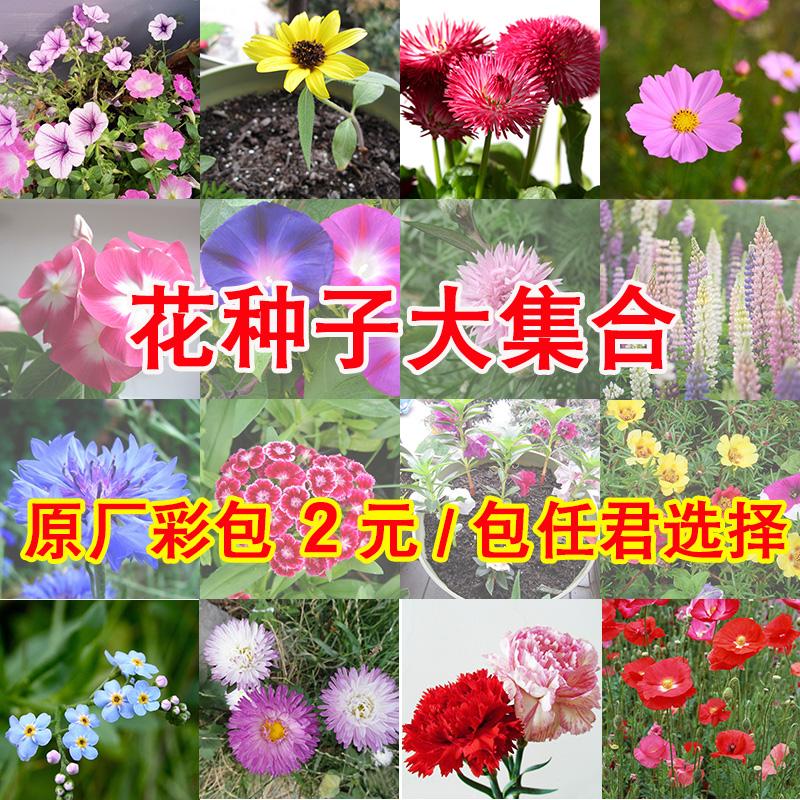 花卉�N子四季播格桑花�蚊草�M天星太�花�f�劬找盎�P仙花向日葵
