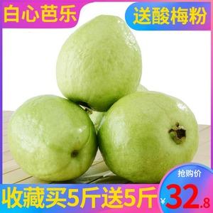 广西新鲜现摘珍珠5斤包邮番石榴