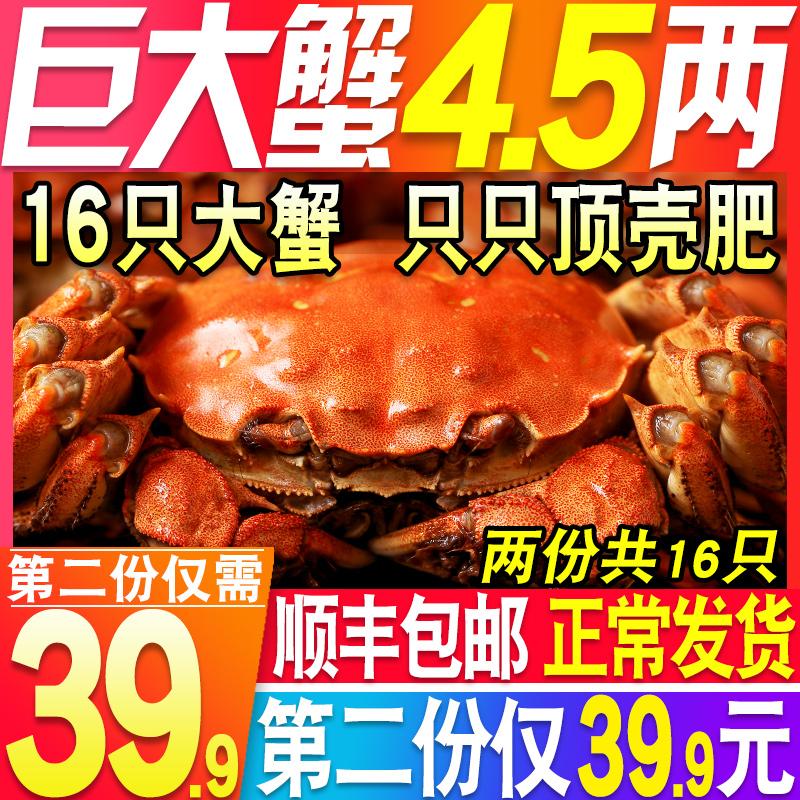 鲜活现货大螃蟹水产大蟹全大闸蟹