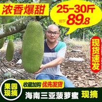 25-30斤海南三亚黄肉菠萝蜜新鲜水果热带波罗蜜木菠萝整个40包邮
