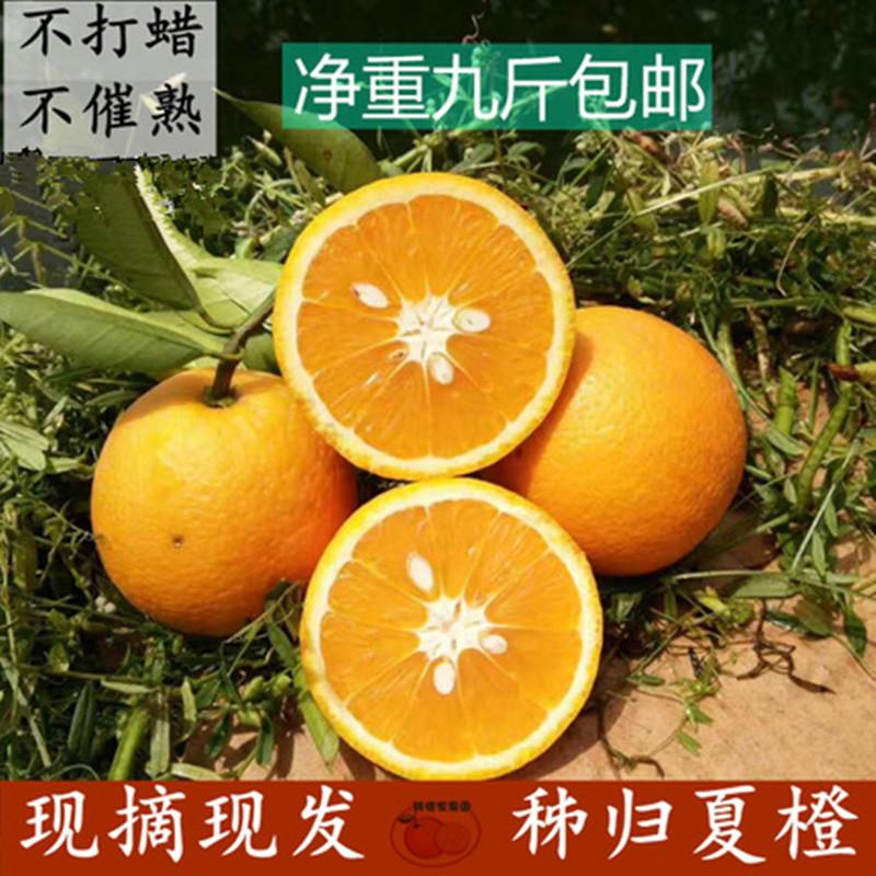 秭归夏橙10斤整箱现摘水果新鲜包邮当季非赣南脐橙伦晚血橙 橙子